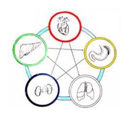 5 elementi organi