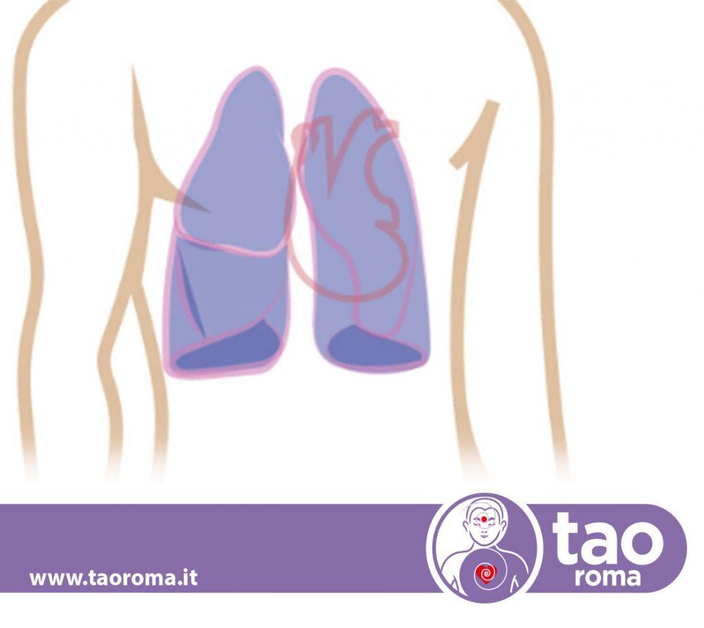 polmoni-foto
